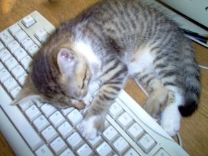 cat-asleep